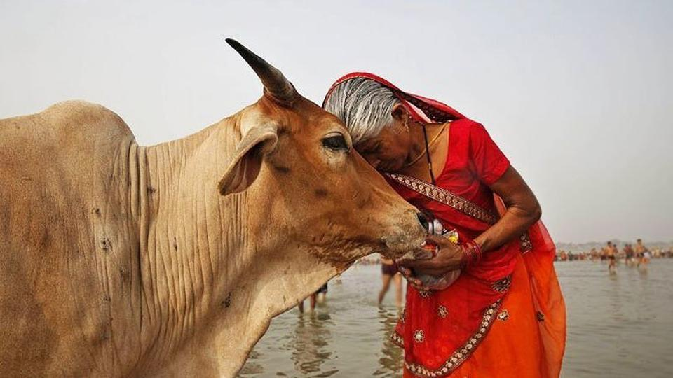 Gujarat Governor O P Kohli on Thursday gave his assent to a bill providing for a sentence up to life term for slaughtering cow and up to ten years in jail for transporting beef in the state.