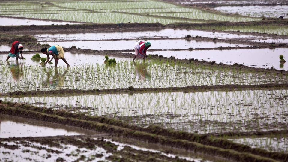 Irrigation department,Chief minister Yogi Adityanath,El Nino