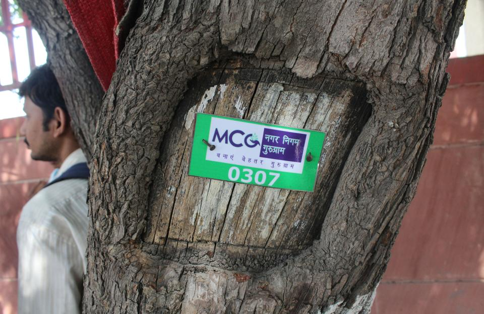 The  Municipal Corporation Gurgaon (MCG) is creating a database for the number of trees in the city.