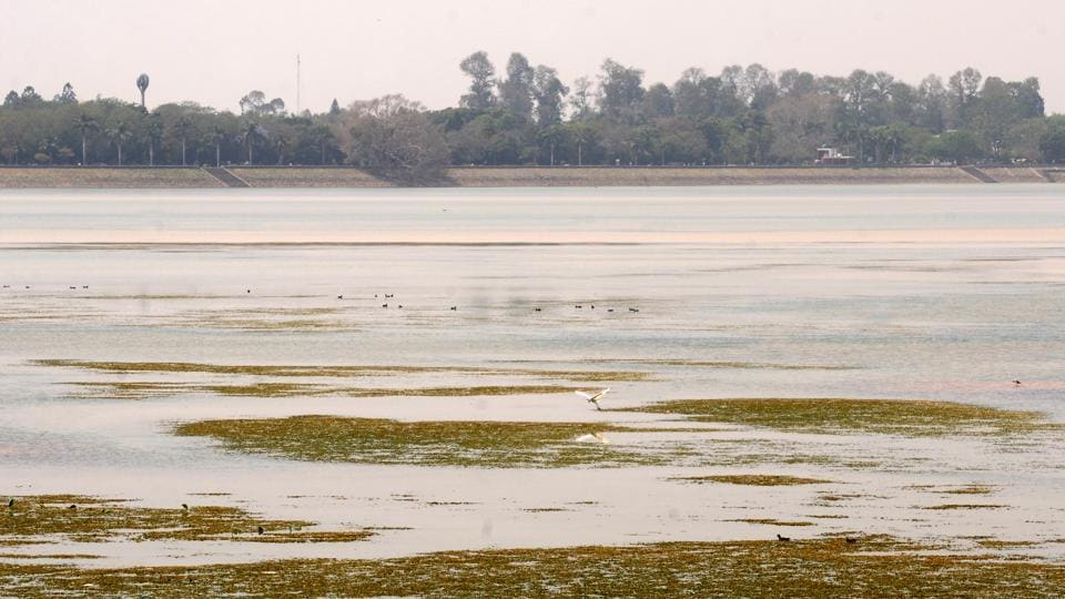 Sukhna Lake's water level has been receding by the day. Mushrooming of housing projects and population influx would adversely affect its catchment area, which is already reeling under low rainfall.