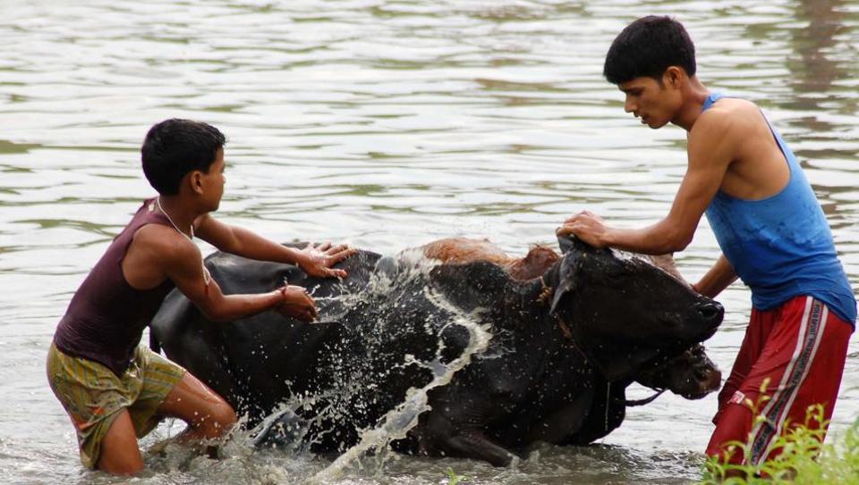 Bihu festival,Cow vigilantism,Sarbananda Sonowal