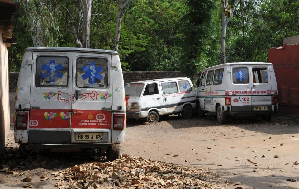 Cow,ambulance,cow vigilantes