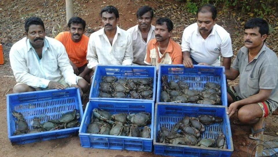 Crab farmers pose with their harvest at Sindhudurg.