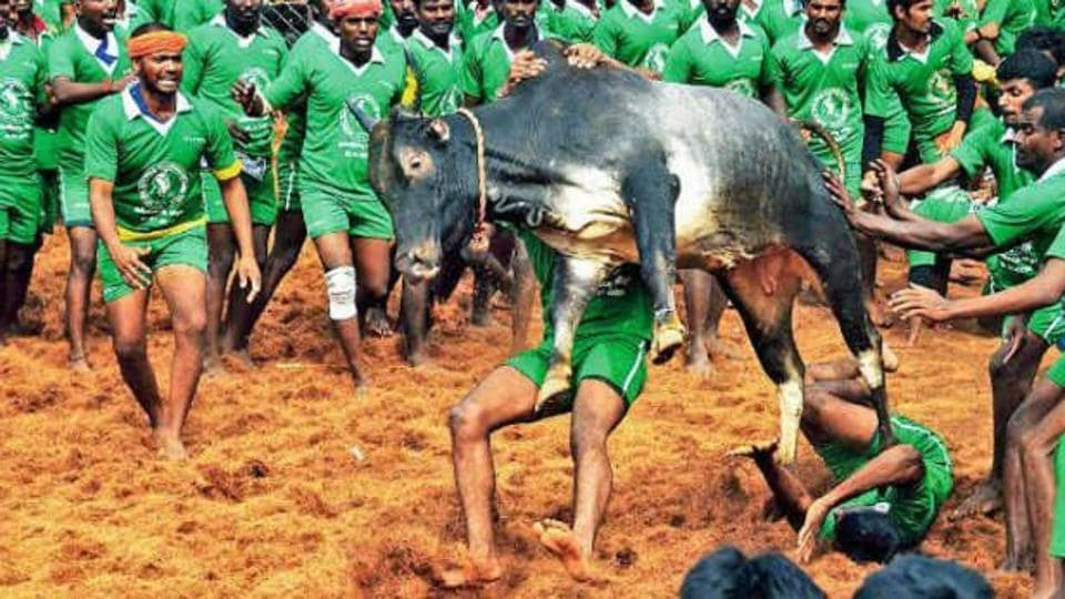Two spectators died, one of them gored by a bull, and 80 persons were injured in the 'jallikattu' (bull taming) sport at M Pudur area of the district onSunday, police said.