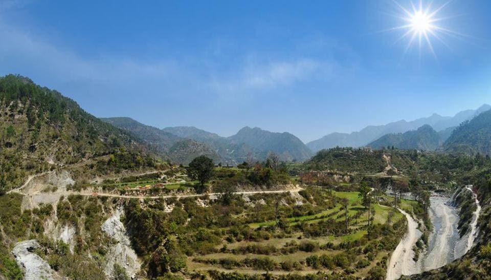 Highland agricultural terrace fields of wheat at Gauchar in Uttarakhand.