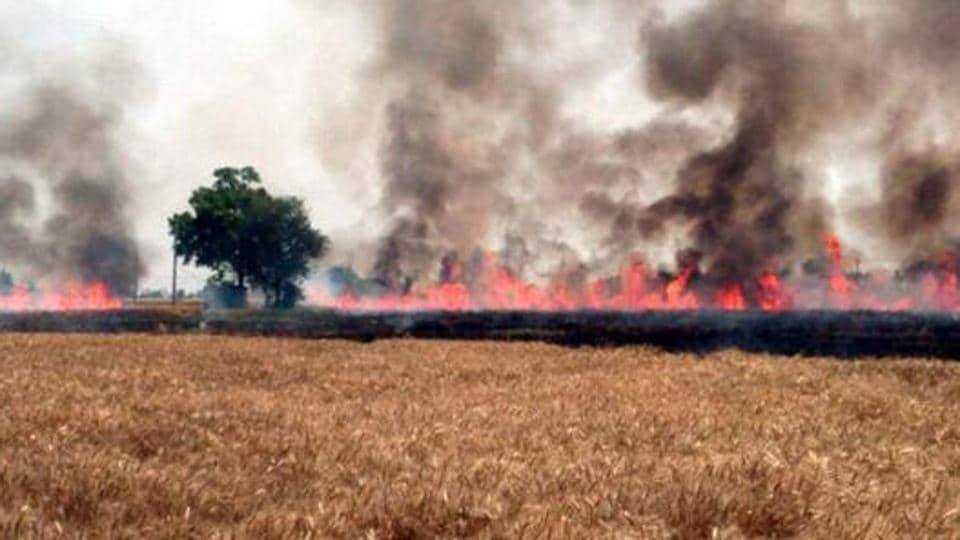 Jogewala,Kahan Singh Wala,wheat burnt