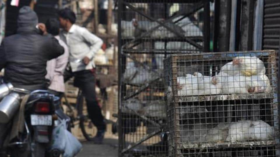 Officials said that those who have been issued a licence will not be allowed to slaughter animals or birds in the shop. They have to procure meat from wholesale markets and sell it to consumers.