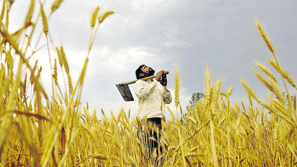 The Sena claimed that at least 5-10 farmers commit suicide everyday and the number has exceeded 100 this month itself.