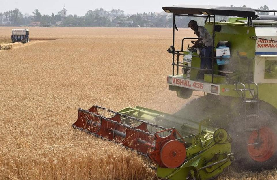 A wheat harvesting machine at work in fields near Jalandhar. (Sikander Singh Chopra/HT)