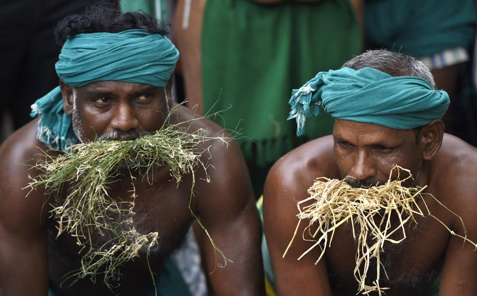 The farmers of Tamil Nadu on Monday ate grass as a symbol of their deteriorating plight, at Jantar Mantar in the national capital.  (Sonu Mehta/HT PHOTO)