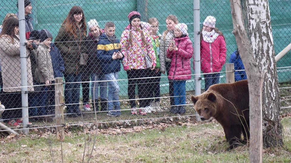 School children look at a bear as they visit a shelter for bears rescued from circuses and private restaurants of Ukraine. (Sergei Supinsky / AFP)