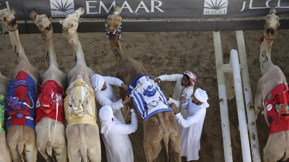 Owners of winning camels get  trophies that include brand-new luxury cars all the way up to the top prize of more than half a million dollars. (Kamran Jebreili / AP)