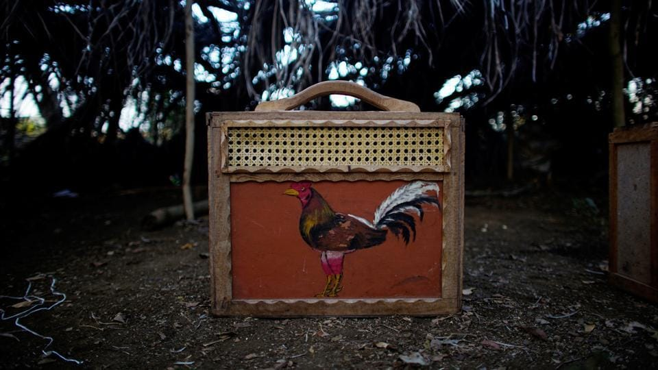 A handmade case used to transport a rooster. (Alexandre Meneghini  / Reuters)