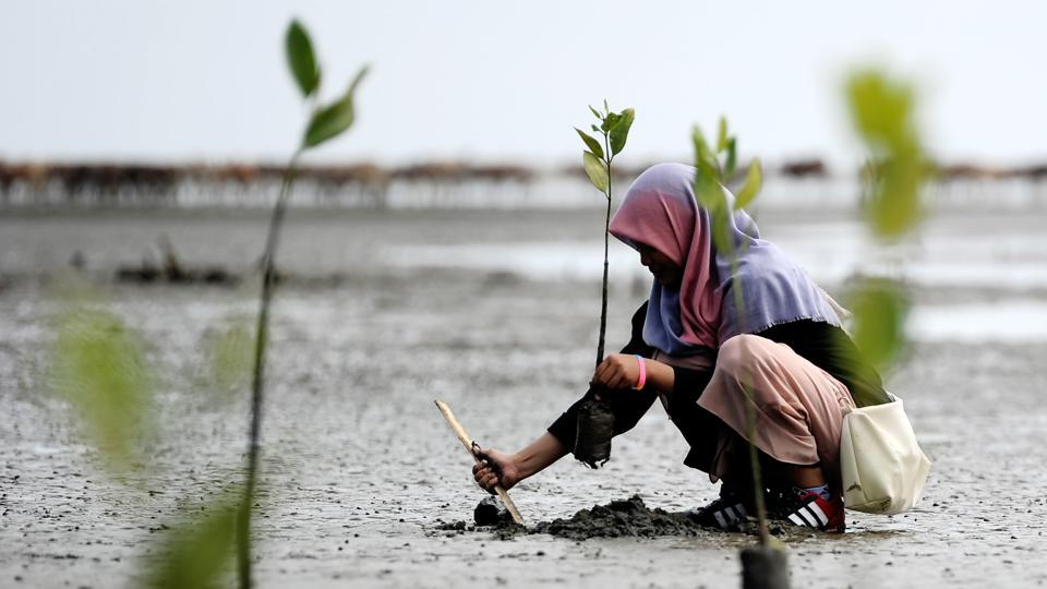 An Indonesian student plants a mangrove at Ujong Pancu beach in Aceh Besar. (Chaideer Mahyuddin/AFP)