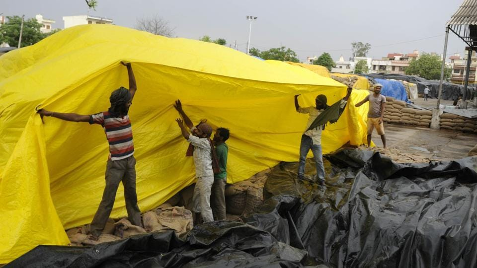 Labourers covering wheat bags during the rain at a grain market in Patiala on Saturday, April 22.