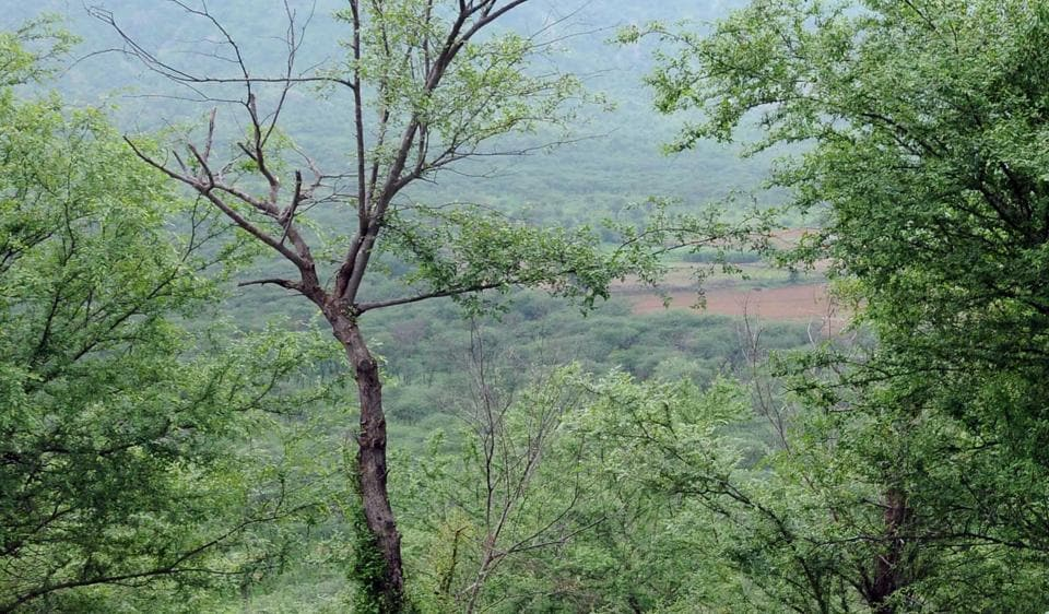 A view of the Jhalana forest area in Jaipur.