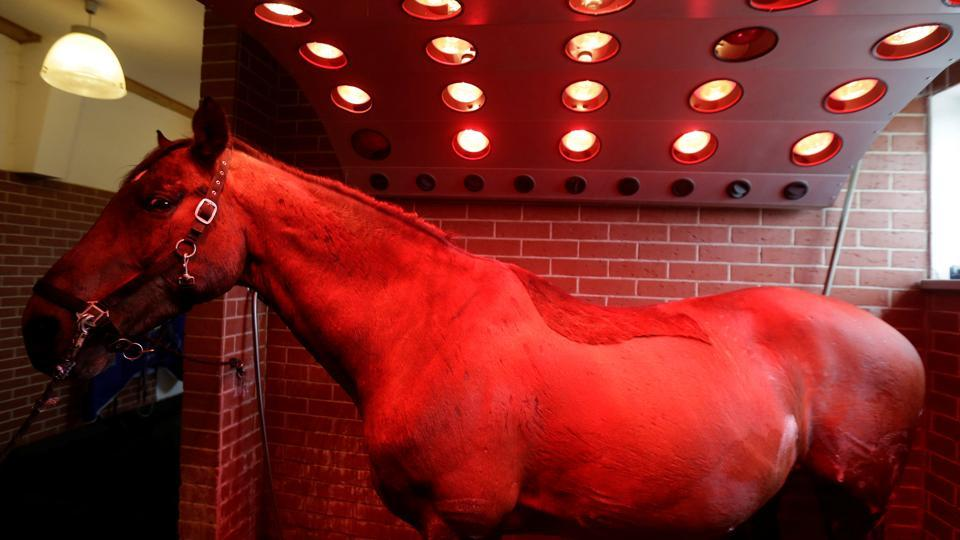 A horse stands under a solarium inside the horse rehabilitation centre in the village of Hrobice, Czech Republic on April 21, 2017. (David W Cerny/REUTERS)