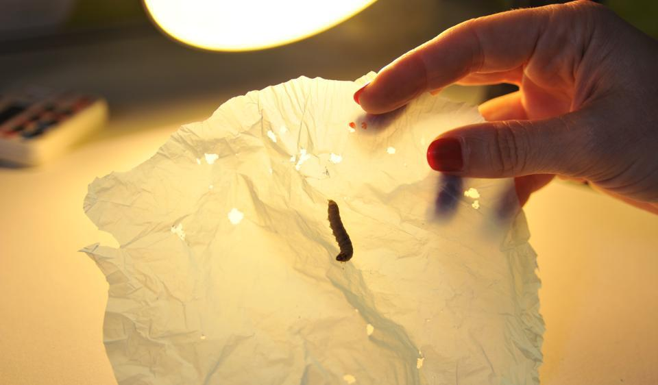 plastic,worms,wax worms