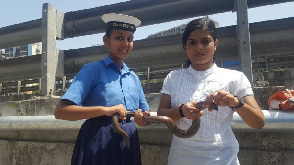 snake rescued,Plants and Animals Welfare Society,exotic species