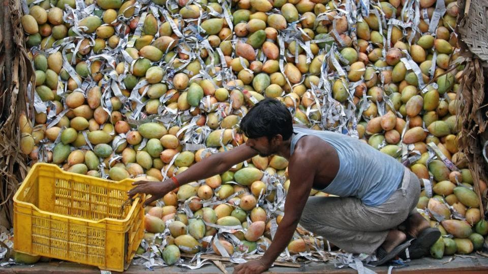 India,Australia,Indian Mangoes