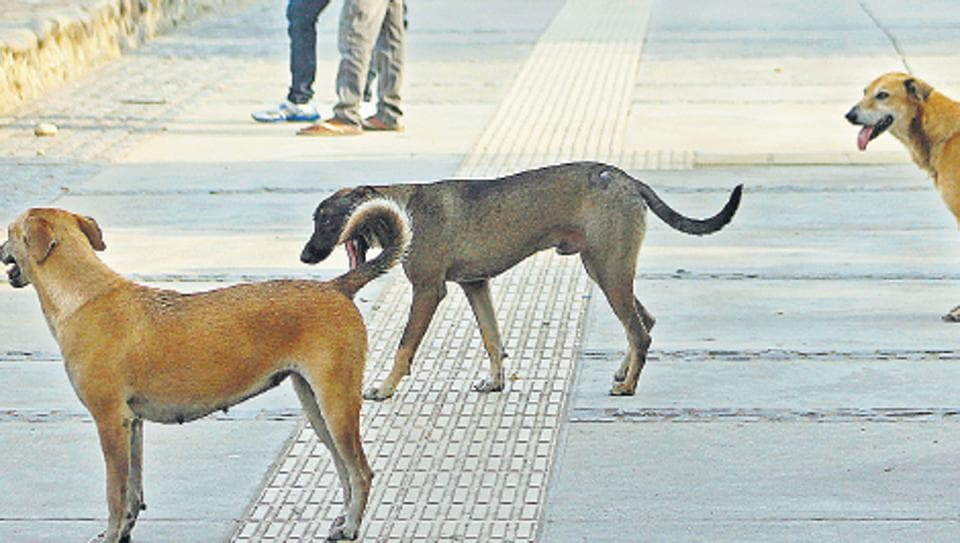 Stray dogs roaming at Sukhna Lake in  Chandigarh.