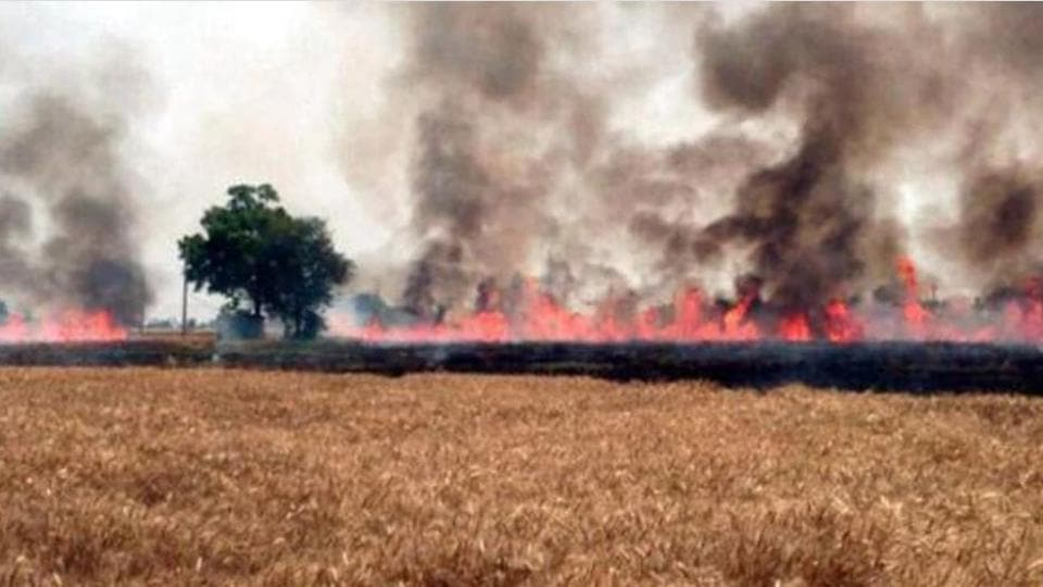 Farmers, however, differ with the PSPCL figure with reports of fire in fields coming from different parts of the state every day.