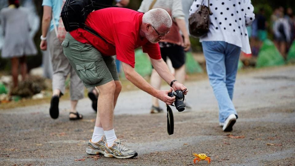 A tourist takes a photograph of a crab coming from the surrounding forests. (Alexandre Meneghini / Reuters)
