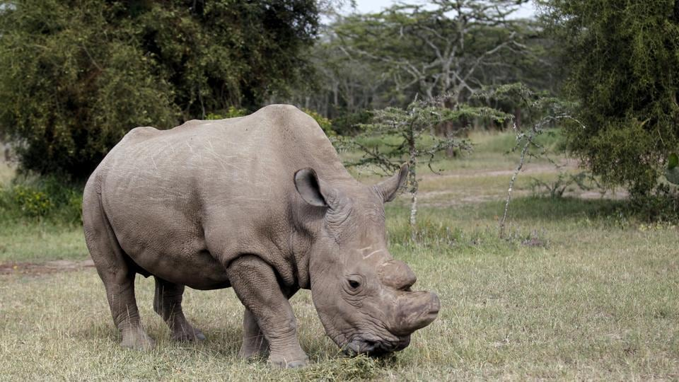 Rhino,Tinder app,Online dating