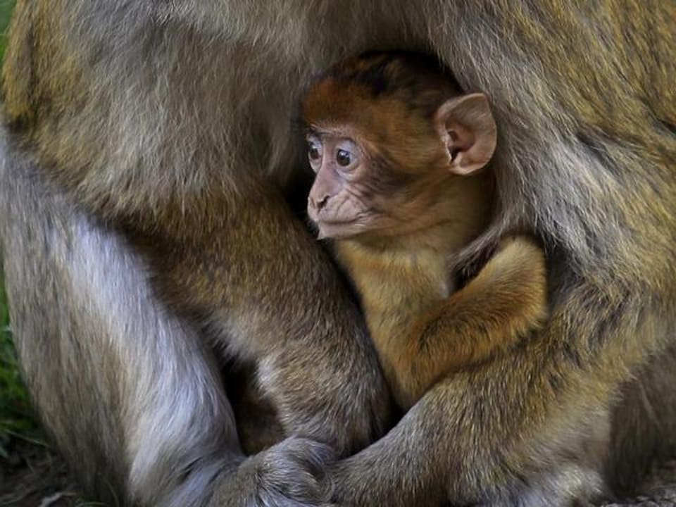 Monkeys, rodents and shrews are hosts for the Kyasanur forest disease virus, which spreads to humans through the bite of an infected tick to cause monkey fever