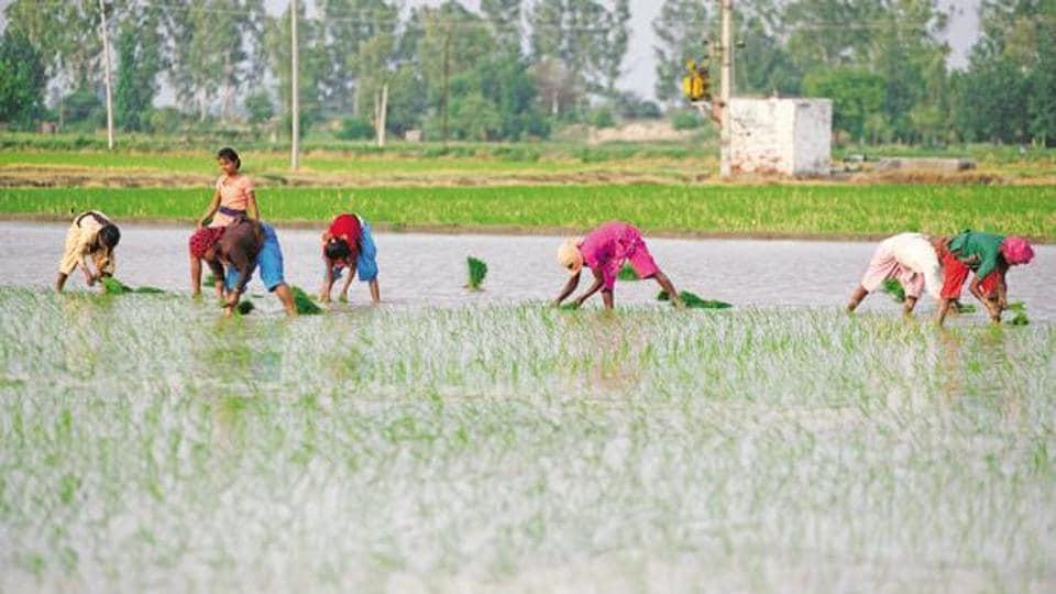 Farers working in a field
