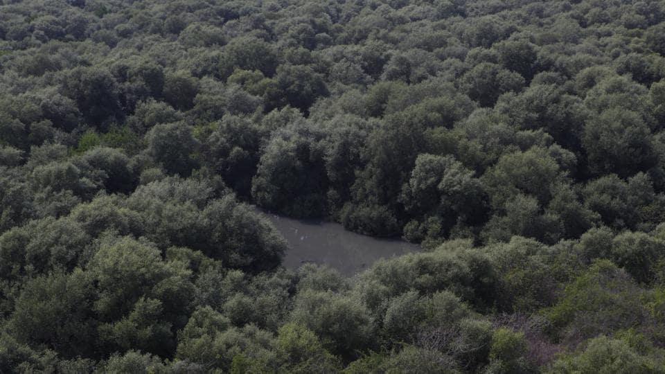 Mumbai mangroves,illegal structures,Mumbai wetlands