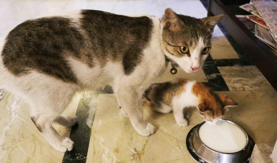 Sheeba, the cat, gave birth to two kittens in March in central Delhi Nizamuddin. Only Momo (in picture) survived.