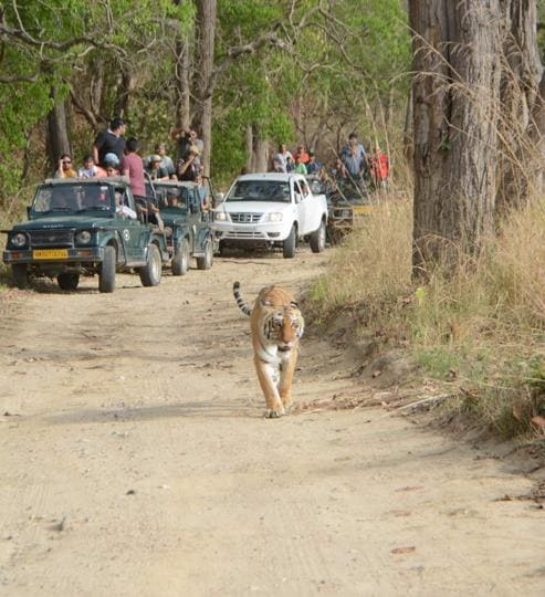 The Uttarakhand government plans to erect fencing along the boundary of Corbett Tiger Reserve (CTR), through which the ambitious Kandi road will be built, to prevent animals, especially tigers, from crossing the border and getting killed by poachers.