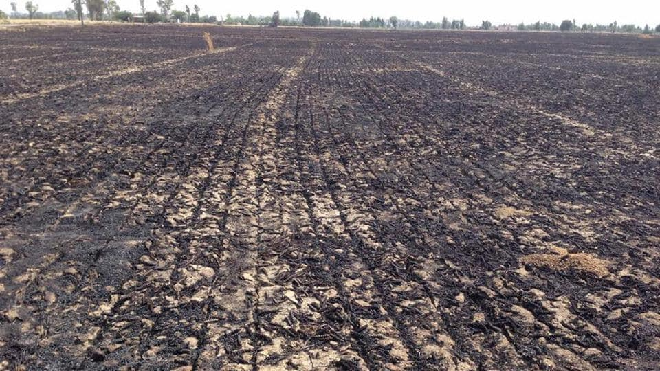 The wheat field that was engulfed in fire at Jhanjoti village in Amritsar district on Thursday.