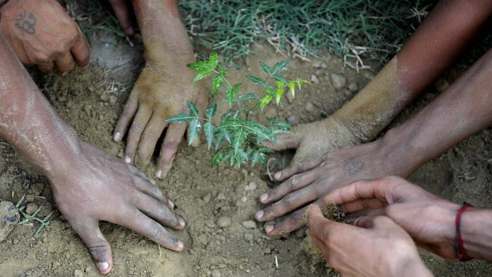 plantation drive,Gautam Budh Nagar,Noida