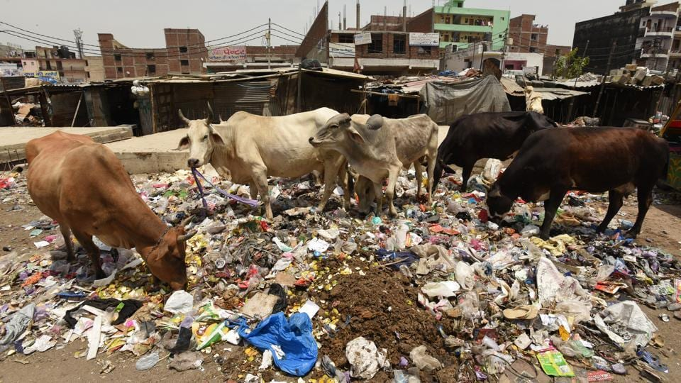 The Noida authority chairman directed officials to improve sanitary conditions.