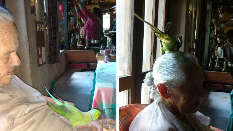The parakeet conquers Didi Contractor.