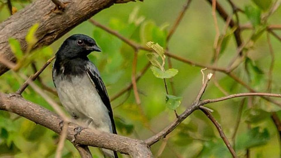 the study has revealed that threat status for at least 10 birds needs to be up-listed, and range maps of 17 birds has been over estimated to a large extent.