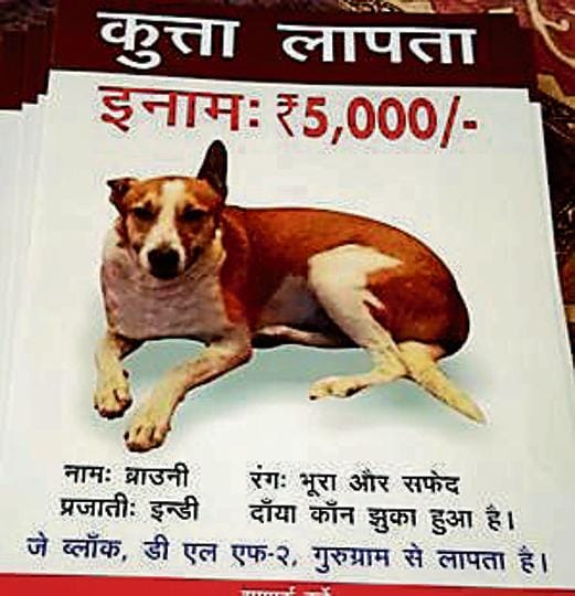 The dog's — called Brownie — owner Anupama Srivastav, noticed the disappearance of her pet on April 1.