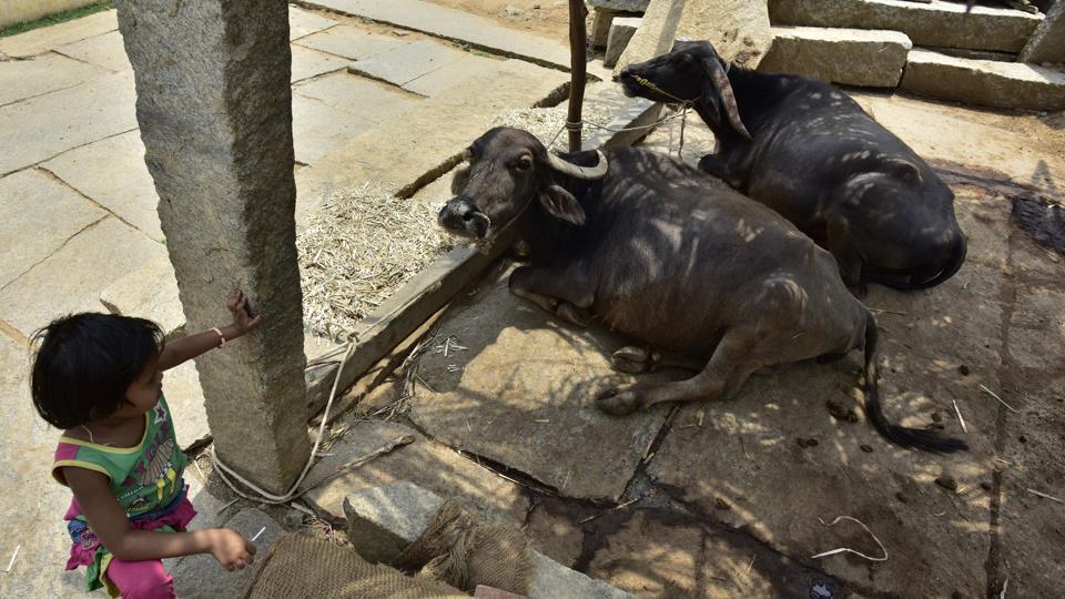 Karnataka drought,Aadhaar,Livestock