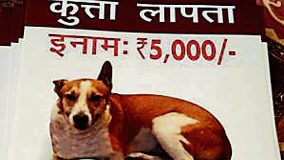dog kidnapped,dog eaten,dog killed