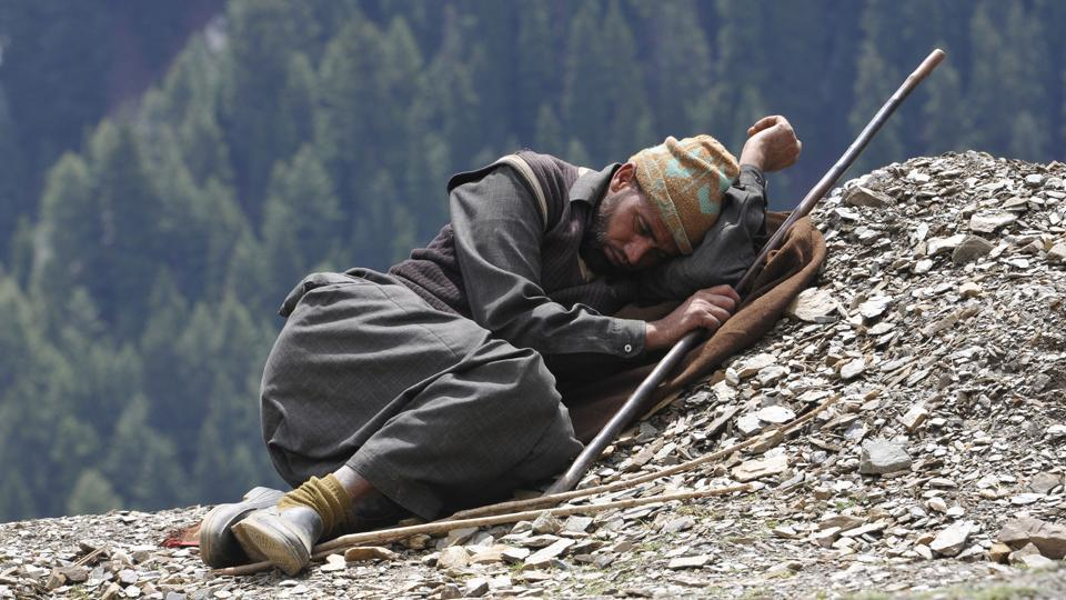 A shepherd catches an afternoon nap after a tiring journey across the mountains. (Waseem Andrabi /HT Photo)