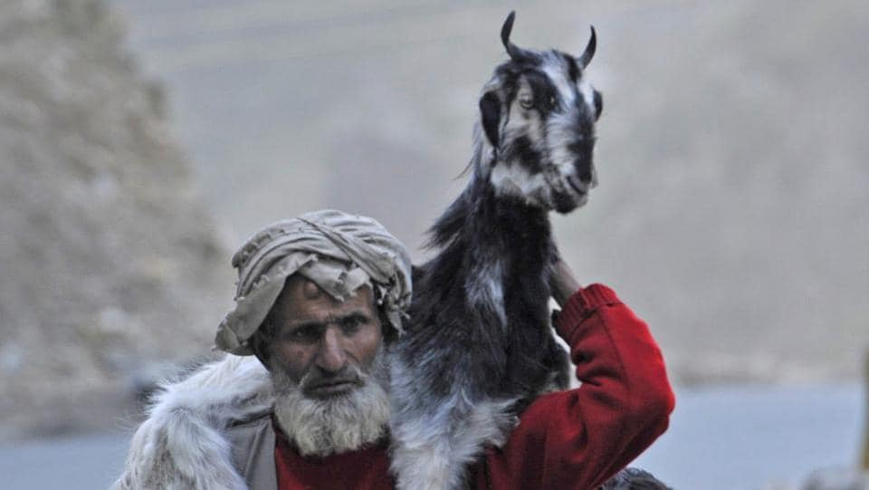 A nomad carries his goat on his back on the Srinagar-Jammu highway. (Waseem Andrabi /HT Photo)