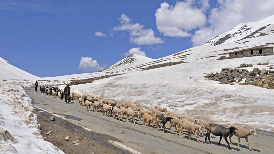 A nomadic shepherd belonging to the Gujjar-Bakarwal community crosses a mountain pass with his flock of sheep and goats. Not very far from Shopian lies the picturesque Peer-Ki-Galli high up in the Pir Panjal moutain range that is famous with tourists who visit it the summer months. (Waseem Andrabi /HT Photo)