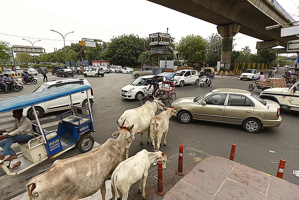 Noida,Noida traffic,traffic signals