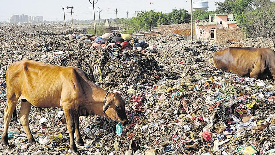 The city produces nearly 950 metric tonnes of daily solid waste, which gets dumped at a temporary landfill site near Pratap Vihar, on vacant land, roadside areas and plots.