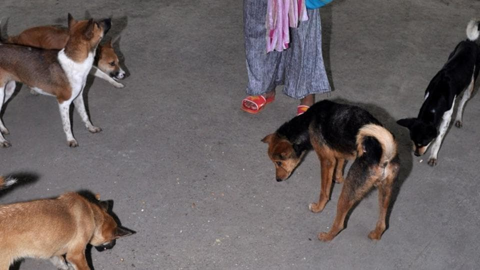 Dogs rescued in Assam on Thursday night.