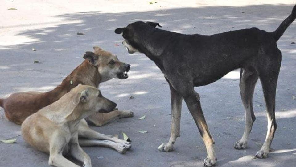 Chandigarh,'dog management',Jaipur