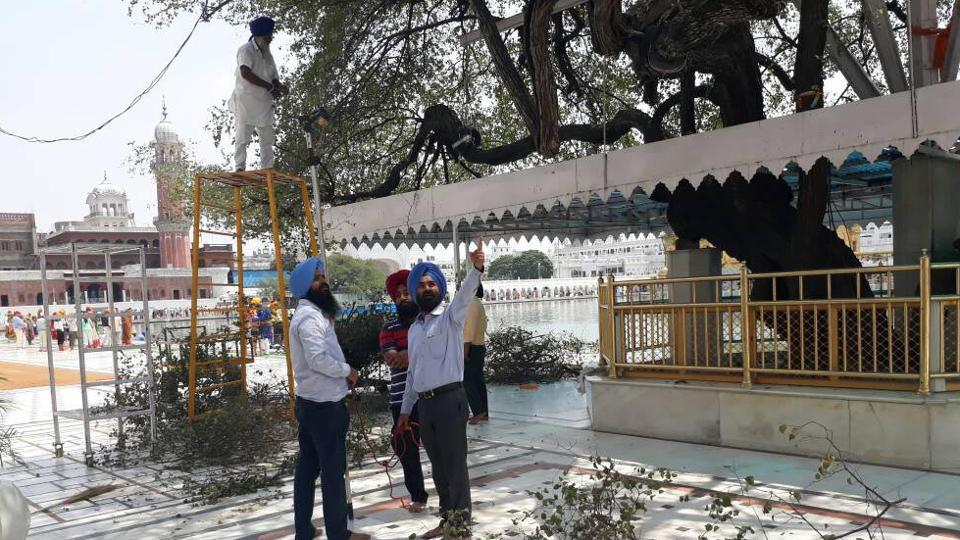 A team from the Punjab Agriculture University during its visit to examine the upkeep of the historical 'Beris' on the Golden Temple premise in Amritsar on Thursday.