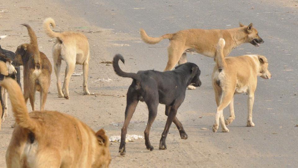 Dog,Himalayas,Livestock